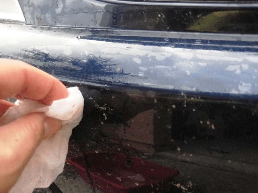 Remove Bugs Using Vinegar